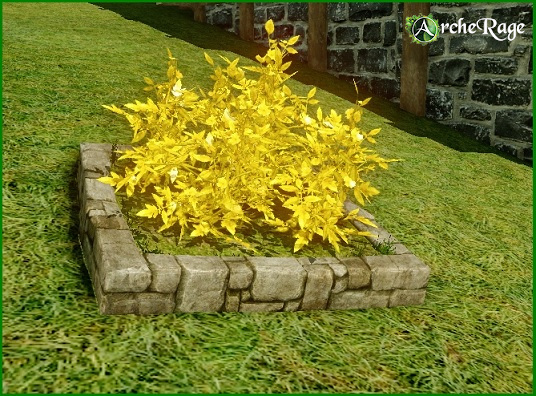 Golden Gembloom Flowerbed.jpg