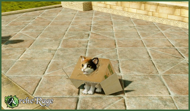 Inbox Calico Housepet.jpg
