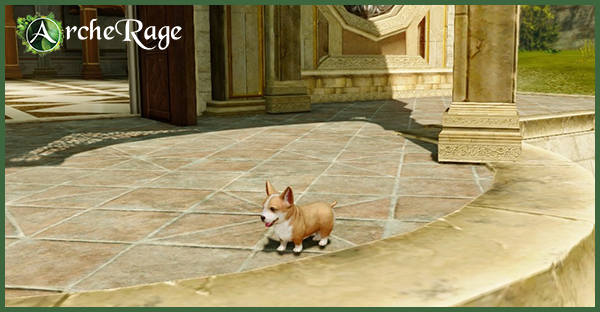 Welsh Little Corgi.jpg